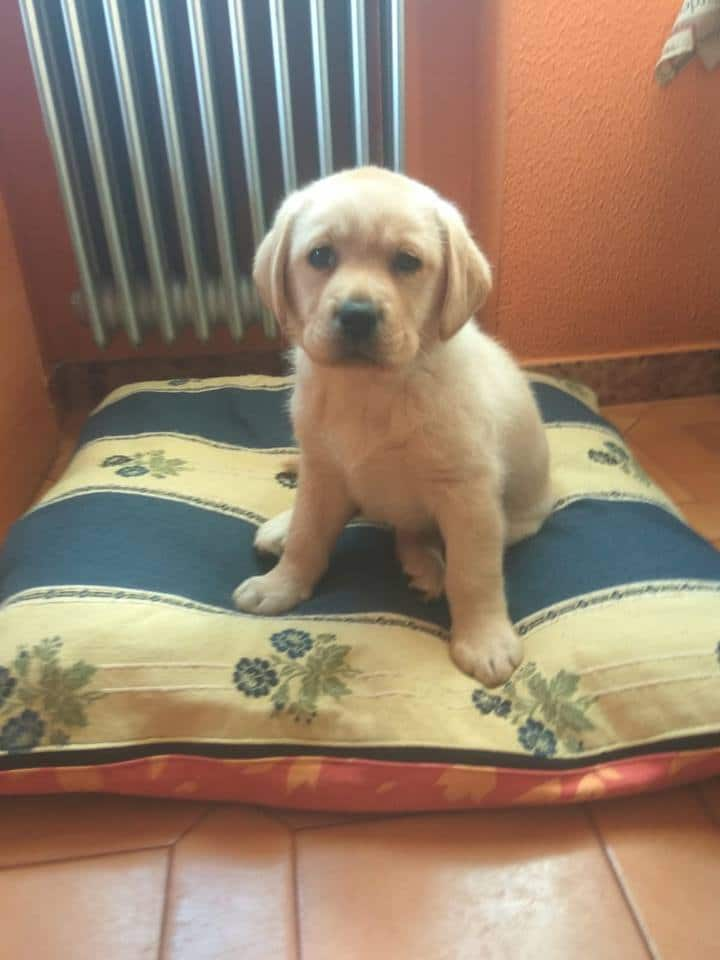 mejor cama para cachorros