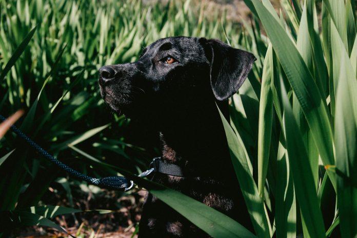 Alimentos peligrosos para perros