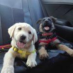 Nombres de perros machos - Top 50 mejores nombres