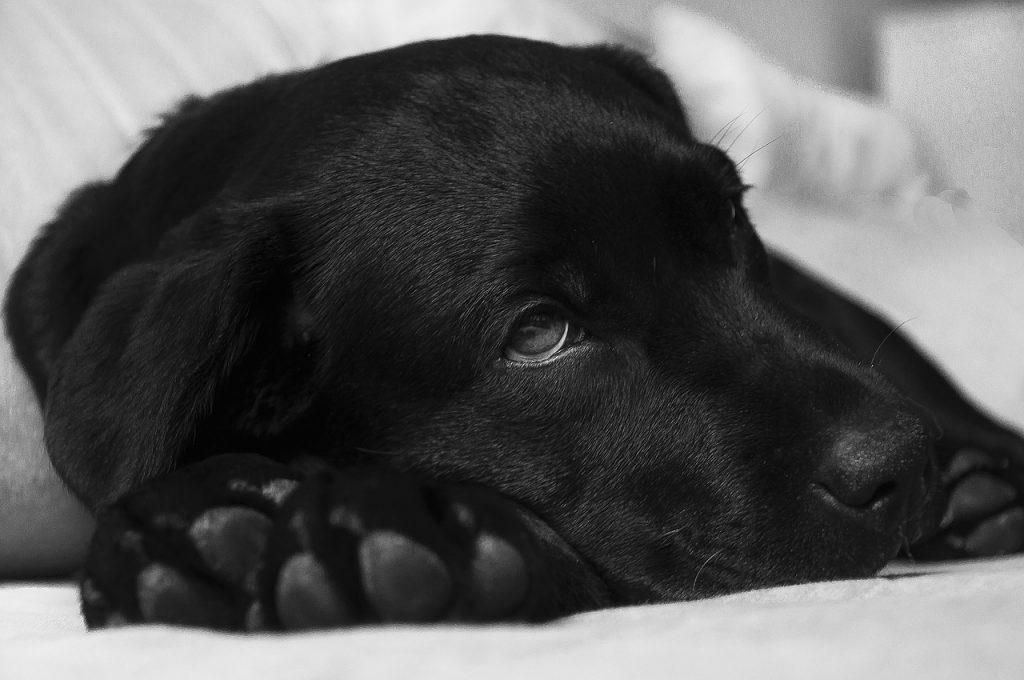cama para perro cachorro