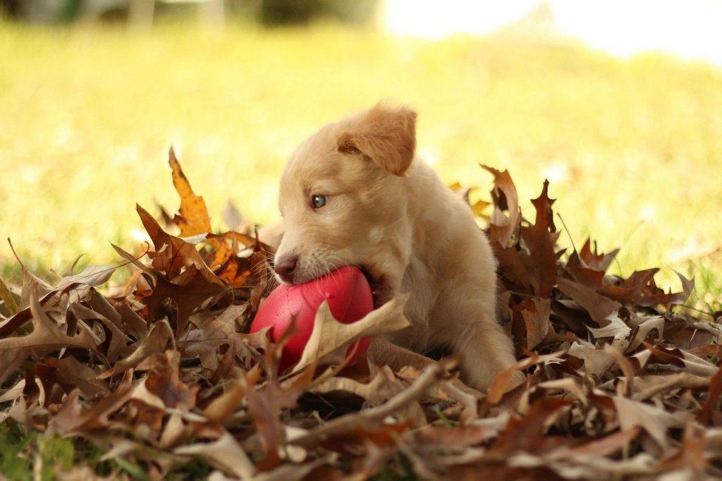 juguetes y alimentacion para perros