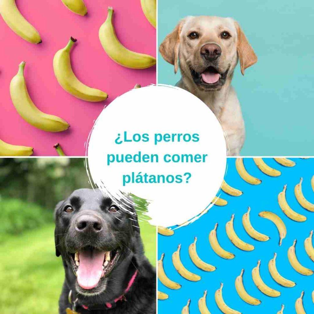 ¿Los perros pueden comer plátanos?¿Los perros pueden comer plátanos?