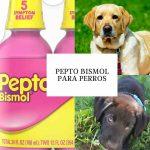 Pepto Bismol para perros - ¿Se puede dar Pepto Bismol a un perro?
