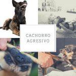 Cachorro agresivo - Cómo educar al cachorro