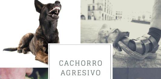 Cachorro agresivo