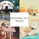 Cachorro de 2 meses: ¿Cómo llevar un nuevo cachorro a casa y qué esperar?