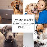 ¿Cómo hacer vomitar a un perro? - Guía de primeros auxilios.