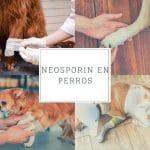 Uso del Neosporin en perros