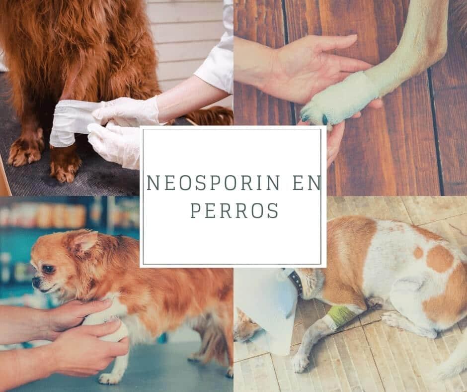 puedo utilizar Neosporin en perros