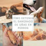 Cómo detener el sangrado de uñas en perros