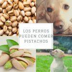 Los perros pueden comer pistachos - ¿Son tóxicos para ellos?