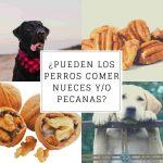 ¿Pueden los perros comer pecanas de manera segura? ¿Son tóxicas?
