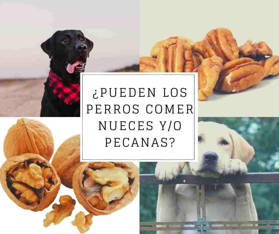 puede comer nueces un perro