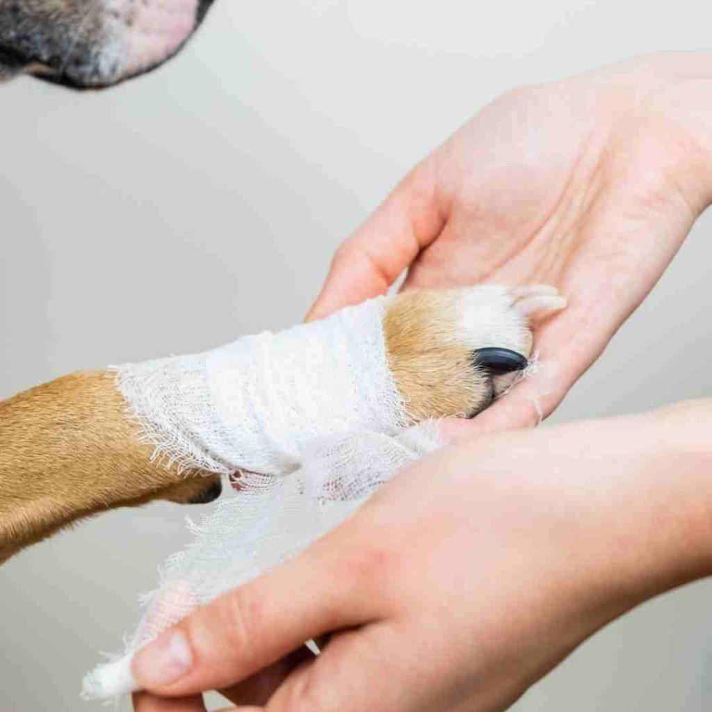 acudir al veterinario
