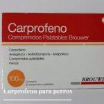 Carprofeno para perros - Qué es, funcionamiento, dosis y efectos secundarios.