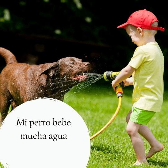 Cuánta agua debe beber un perro