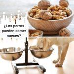 ¿Los perros pueden comer nueces? ¿Cuándo son venenosas?