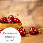 Pueden comer cerezas los perros - ¿Es seguro compartir esta fruta con nuestro perro?
