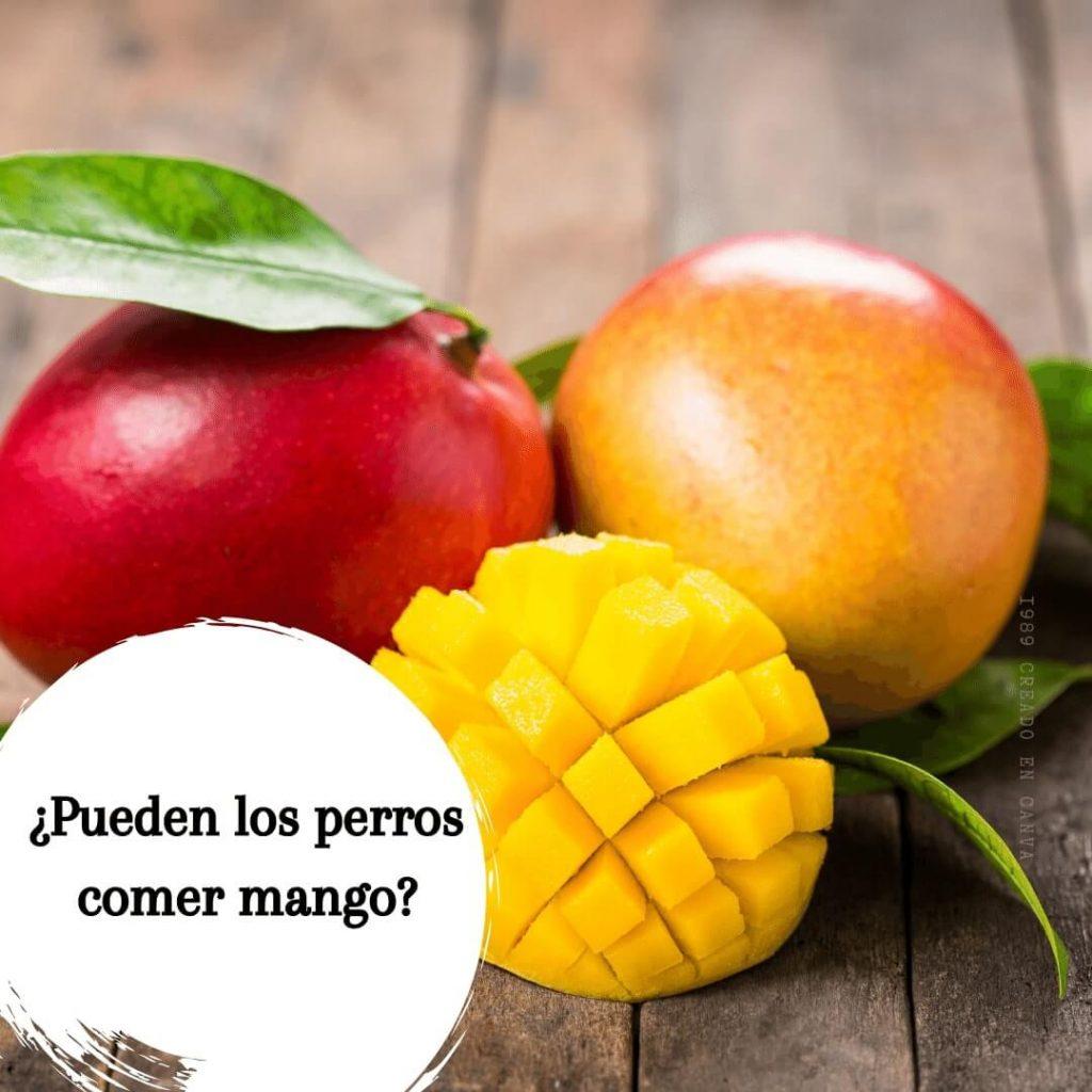 Pueden los perros comer mango