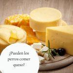 ¿Pueden los perros comer queso? ¿Es un alimento tóxico para los perros?