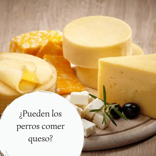 Pueden los perros comer queso