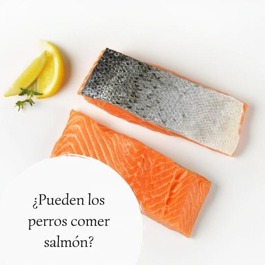 Pueden los perros comer salmón