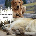 ¿Cómo calmar a un perro? Los mejores consejos para tener perros tranquilos