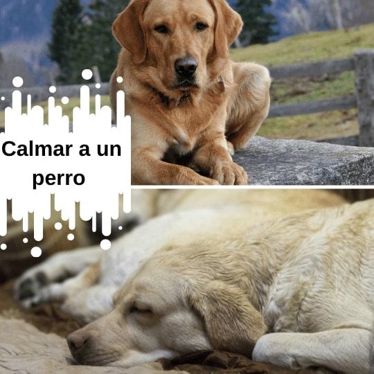 como calmar a un perro