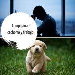 Consejos para criar un cachorro si trabajamos