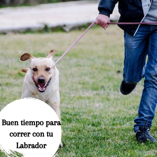 correr con un labrador