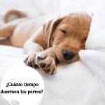¿Cuánto tiempo duermen los perros? ¿Tu perro duerme demasiado?