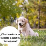¿Cómo enseñar a un cachorro a hacer pis fuera de casa?