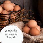¿Pueden los perros comer huevos? Guía para alimentar al perro con huevos de forma segura