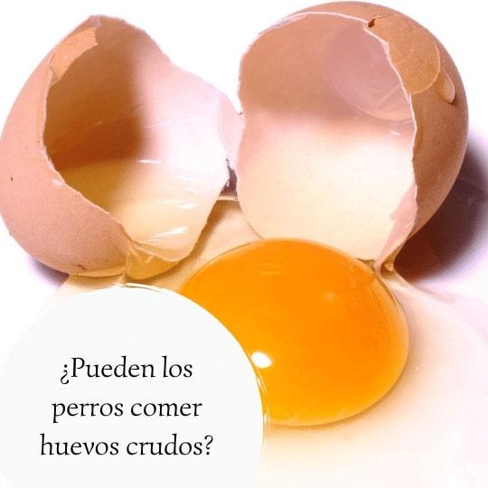 los perros pueden comer huevo crudo
