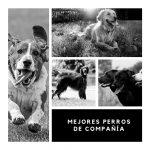 Los mejores perros de compañía para solteros, familias y personas mayores