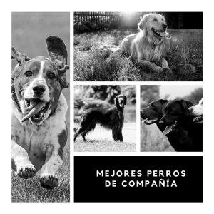 mejores perros de compañía