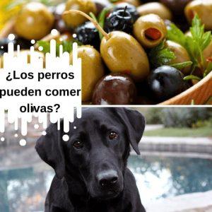 ¿Los perros pueden comer olivas?