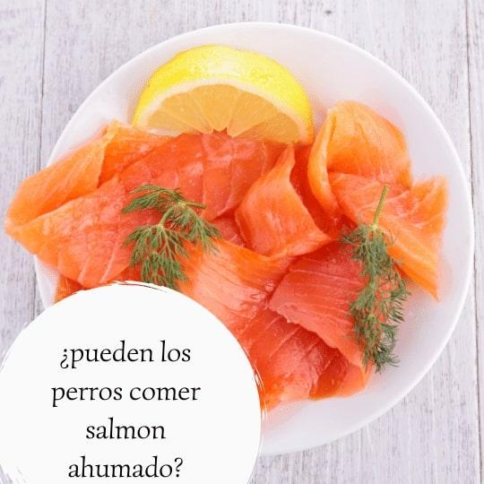 pueden los perros comer salmon ahumado