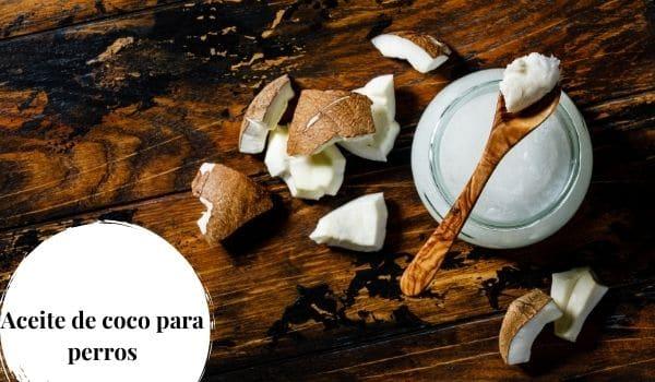 Aceite de coco en la alimentación de nuestros perros