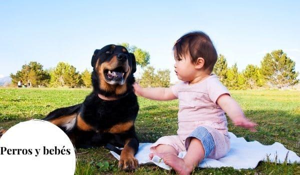 Enseñar a los niños a tratar a los perros