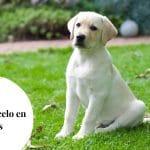 Etapas del celo en perras ¿Cuánto dura? Preguntas frecuentes