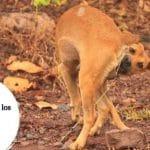 Lombrices en los perros - Síntomas y tratamientos
