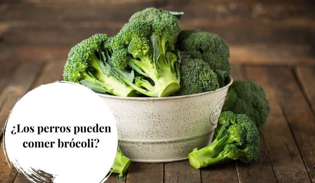 Los perros pueden comer brócoli