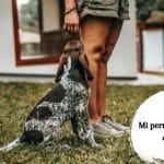 Mi perro no me deja en paz - ¿Qué hacer si tu perro busca constantemente tu atención?