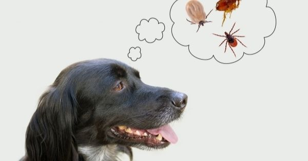 Mi perro puede pegarme las pulgas