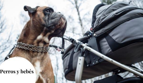 Preparar el encuentro entre perro y bebé