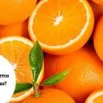 ¿Los perros pueden comer naranjas? ¿Son buenas su salud?