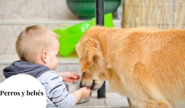 Razas de perros ideales para bebés