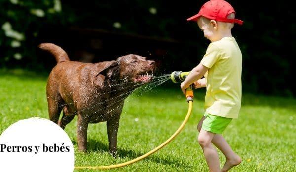 Señales de celos del perro hacia el bebé