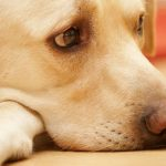 Tristeza en los Perros ¿Cómo animarlos?